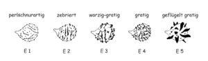Sporen-Typen-Sonderformen
